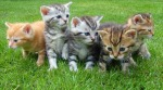 five kittens on the grass